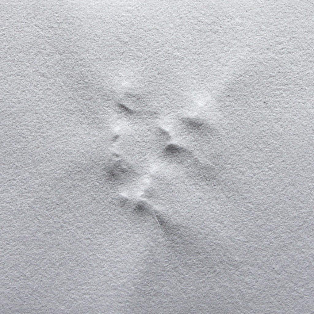 Dorina Csiszár, Lag er schon in der Tasche bereit?, 2020, Steinabdrücke auf Büttenpapier, gefaltetes Leporello, 20 x 20 cm