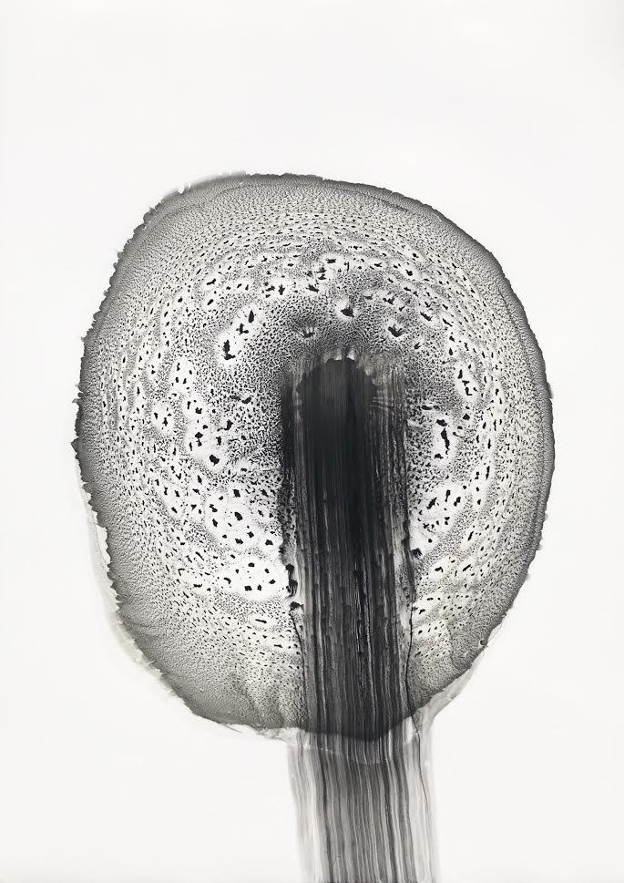 Pusteblume, 2021, Pigment und synthetisches Bindemittel auf Steinpapier 42 x 29,7 cm